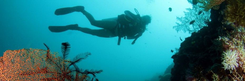 Scuba Diver exploring the coral reefs in Moalboal