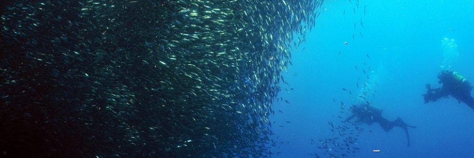 Scuba Diving into the giant sardine ball of Moalboal