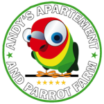 Andy's Apartment - Room for Rent in Moalboal